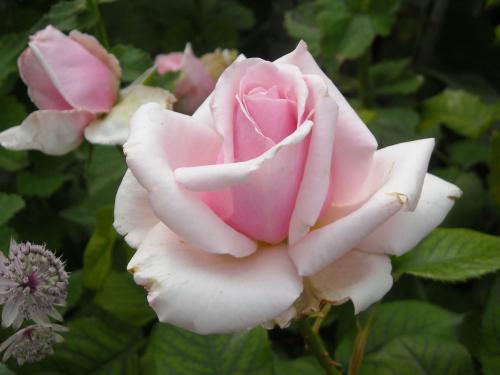 Flower1396-.JPG